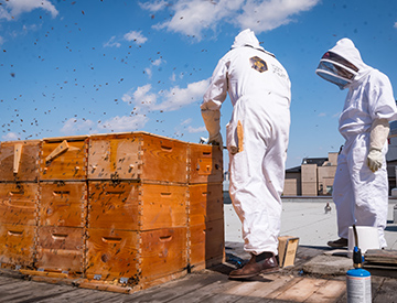 Beekeepers with bees on rooftop