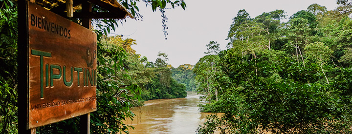 Photo of the Tiputini Project - Rain forest